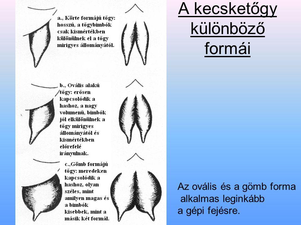 A kecsketőgy különböző formái Az ovális és a gömb forma alkalmas leginkább a gépi fejésre.