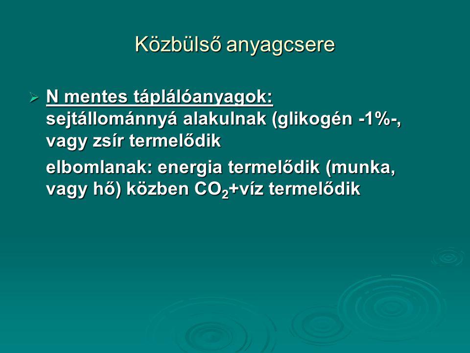 Közbülső anyagcsere  N mentes táplálóanyagok: sejtállománnyá alakulnak (glikogén -1%-, vagy zsír termelődik elbomlanak: energia termelődik (munka, vagy hő) közben CO 2 +víz termelődik