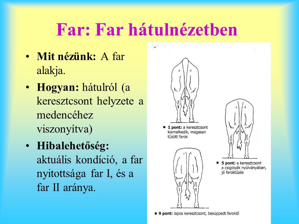 Far: Far hátulnézetben Mit nézünk: A far alakja. Hogyan: hátulról (a keresztcsont helyzete a medencéhez viszonyítva) Hibalehetőség: aktuális kondíció,