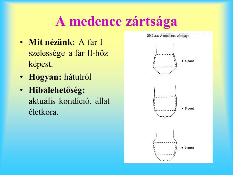 A medence zártsága Mit nézünk: A far I szélessége a far II-höz képest. Hogyan: hátulról Hibalehetőség: aktuális kondíció, állat életkora.