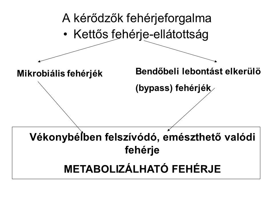 A kérődzők fehérjeforgalma Kettős fehérje-ellátottság Mikrobiális fehérjék Bendőbeli lebontást elkerülö (bypass) fehérjék Vékonybélben felszívódó, emészthető valódi fehérje METABOLIZÁLHATÓ FEHÉRJE
