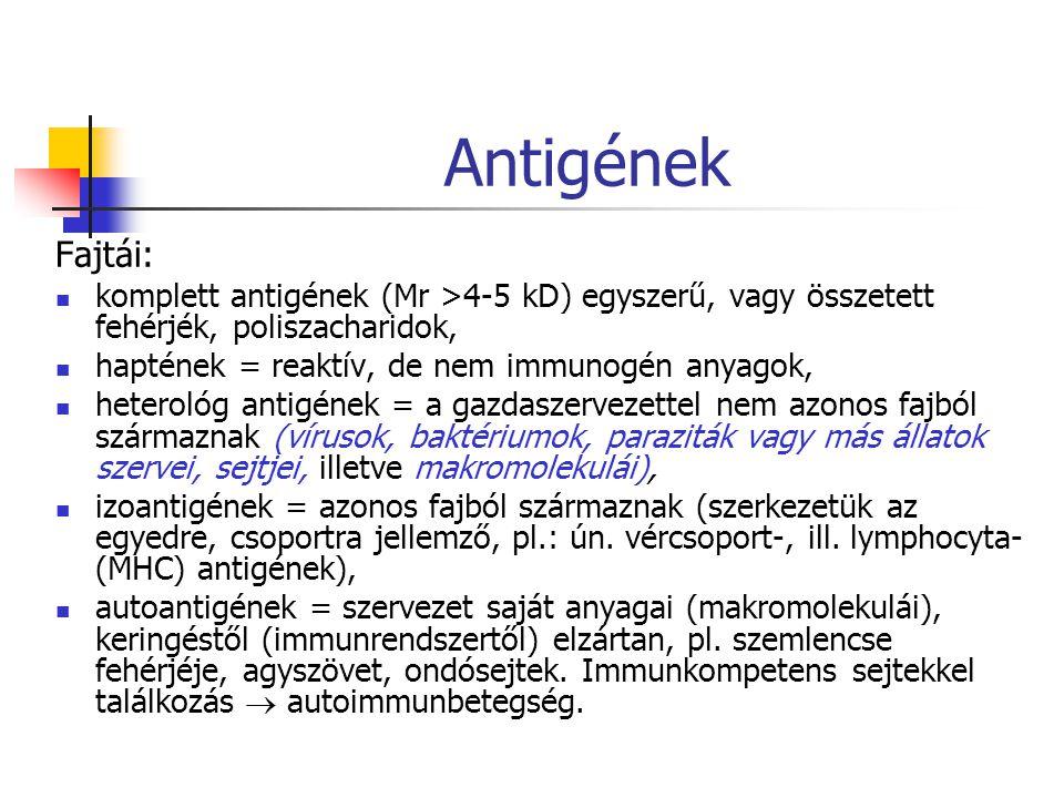 Antigének Fajtái: komplett antigének (Mr >4-5 kD) egyszerű, vagy összetett fehérjék, poliszacharidok, haptének = reaktív, de nem immunogén anyagok, heterológ antigének = a gazdaszervezettel nem azonos fajból származnak (vírusok, baktériumok, paraziták vagy más állatok szervei, sejtjei, illetve makromolekulái), izoantigének = azonos fajból származnak (szerkezetük az egyedre, csoportra jellemző, pl.: ún.