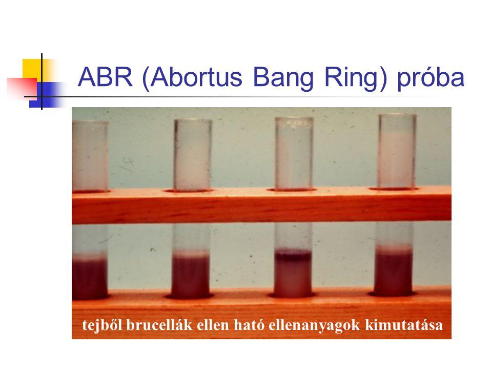 ABR (Abortus Bang Ring) próba tejből brucellák ellen ható ellenanyagok kimutatása