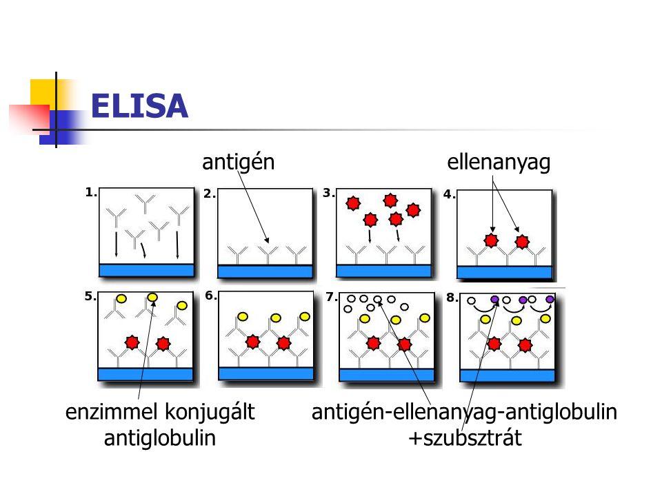 ELISA antigénellenanyag antigén-ellenanyag-antiglobulin +szubsztrát enzimmel konjugált antiglobulin