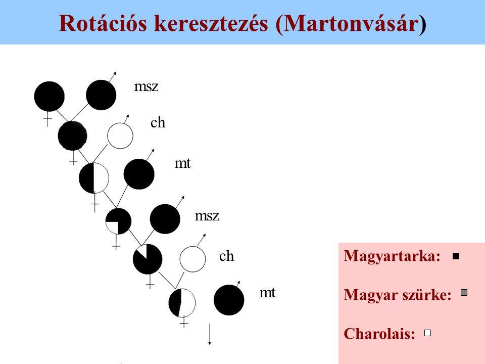 Rotációs keresztezés (Martonvásár) Magyartarka: Magyar szürke: Charolais: msz ch mt msz ch mt