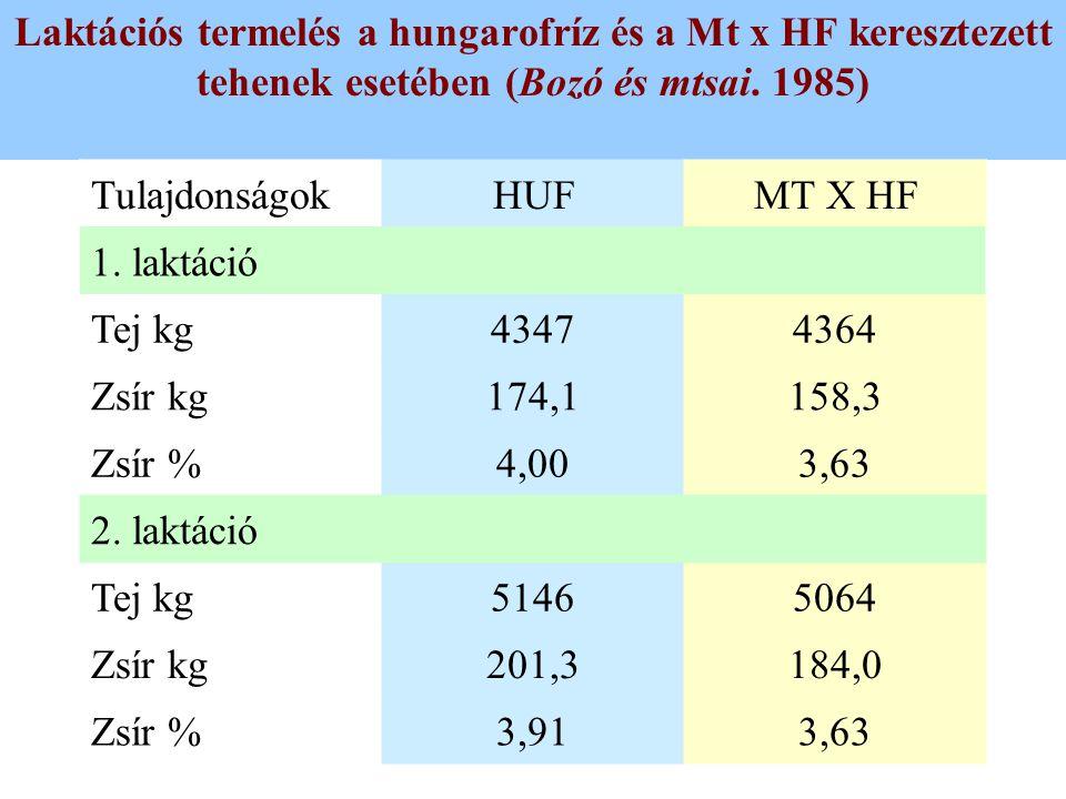 Laktációs termelés a hungarofríz és a Mt x HF keresztezett tehenek esetében (Bozó és mtsai. 1985) TulajdonságokHUFMT X HF 1. laktáció Tej kg43474364 Z