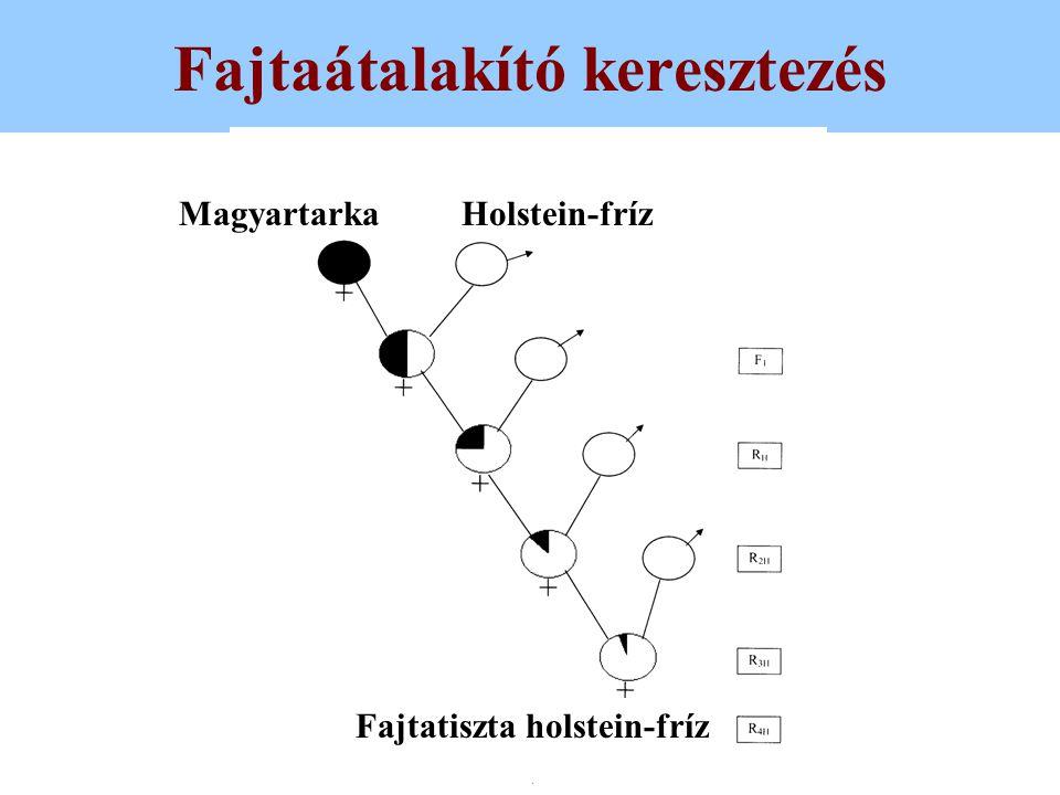 Criss-cross keresztezés MagyartarkaVörös holstein Végeredményben a követ- kező nemzedékek válta- kozva 33,3 % holstein és 66,6 % magyartarka, illetve 33,3 % magyar- tarka és 66,6 % holstein vérhányadúak lesznek.