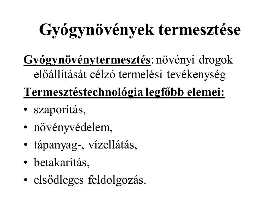 Levendula (Lavandula spp.) drog: virág, illóolaj felhasználás: görcsoldó, emésztésjavító, nyugtató, külsőleg reumára kozmetikai ipar is