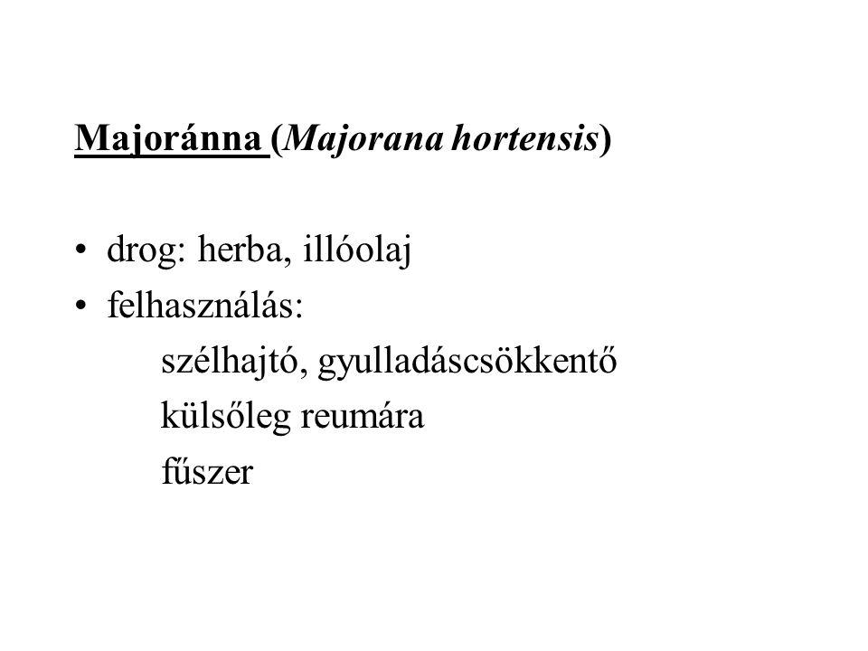 Majoránna (Majorana hortensis) drog: herba, illóolaj felhasználás: szélhajtó, gyulladáscsökkentő külsőleg reumára fűszer