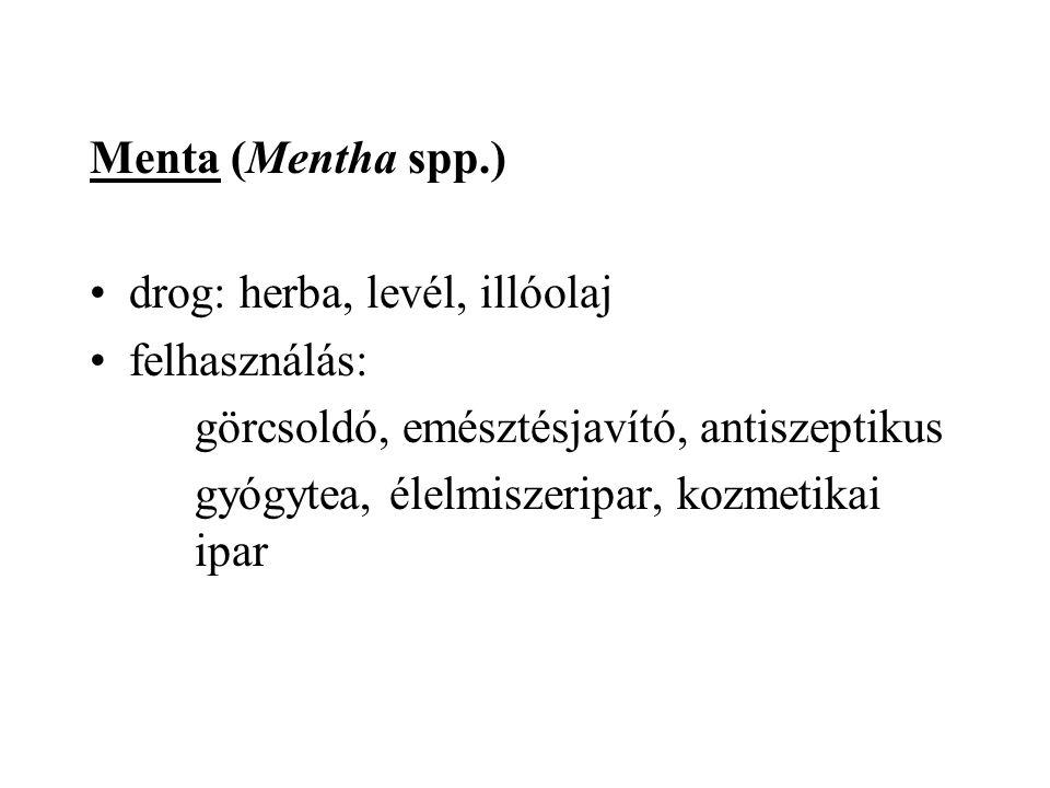 Menta (Mentha spp.) drog: herba, levél, illóolaj felhasználás: görcsoldó, emésztésjavító, antiszeptikus gyógytea, élelmiszeripar, kozmetikai ipar