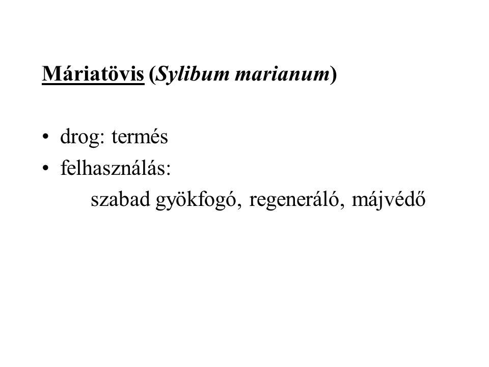 Máriatövis (Sylibum marianum) drog: termés felhasználás: szabad gyökfogó, regeneráló, májvédő