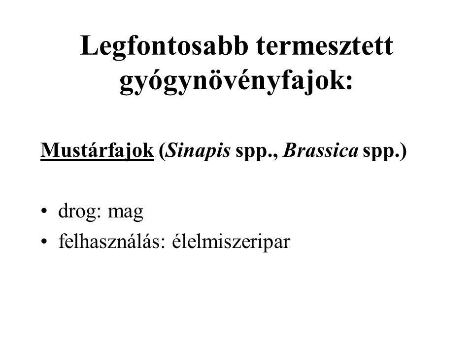 Legfontosabb termesztett gyógynövényfajok: Mustárfajok (Sinapis spp., Brassica spp.) drog: mag felhasználás: élelmiszeripar