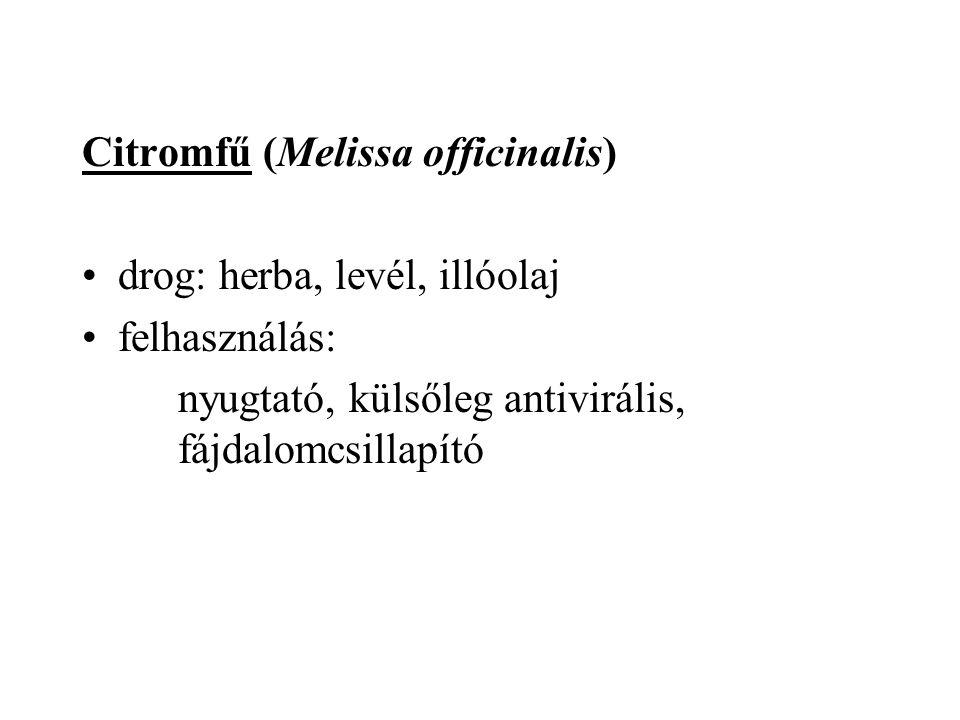 Citromfű (Melissa officinalis) drog: herba, levél, illóolaj felhasználás: nyugtató, külsőleg antivirális, fájdalomcsillapító
