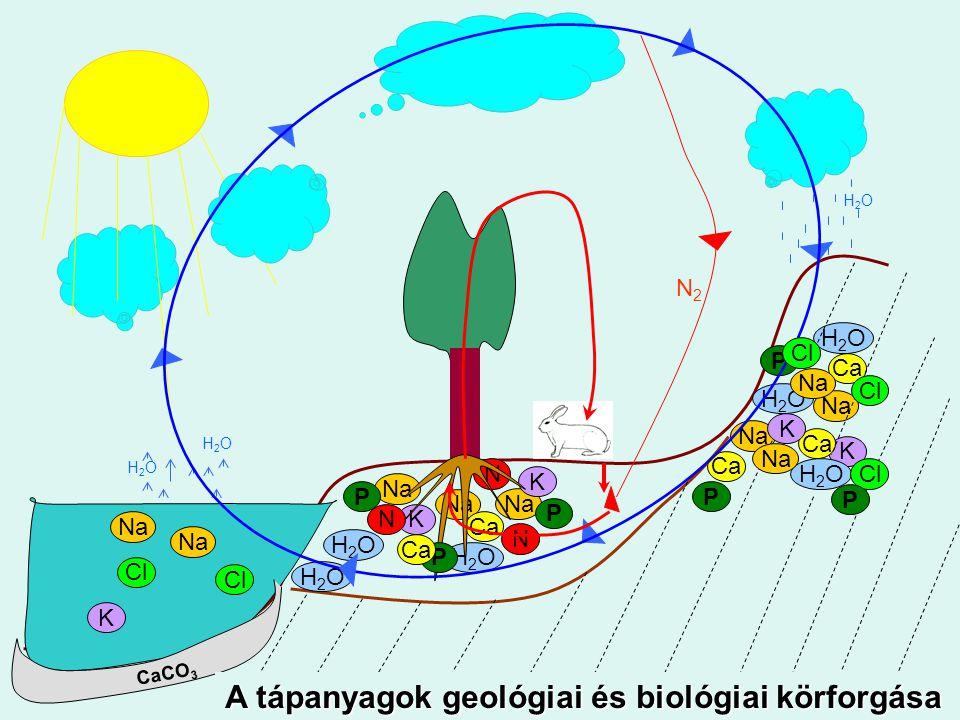 A Föld legkülső szilárd burka, amely a növények termőhelyéül szolgál.