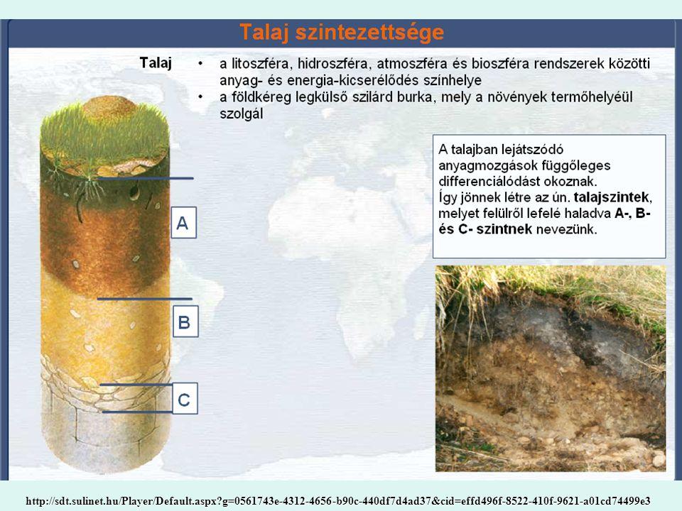 Talajképző tényezők Az éghajlat éghajlati övek (sivatagi, félsivatag, száraz mezőség, nedves mezőség, lomboserdő, fenyőerdő, tundra) hőmérséklet, csapadék, szél Növényzet, élővilág takar, gyökérzet, szerkezet, keverés, mállás biológiai körforgás Földtani tényezők kéregmozgás, talajképző kőzet A domborzat magassági zónák, lejtő irány, erózió Talajvíz vízmozgás, sótartalom Az ember szerepe művelés, pusztítás A talajok kora abszolút, relatív