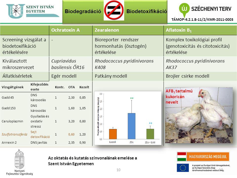 10 TÁMOP-4.2.1.B-11/2/KMR-2011-0003 Az oktatás és kutatás színvonalának emelése a Szent István Egyetemen Ochratoxin AZearalenonAflatoxin B 1 Screening vizsgálat a biodetoxifikáció értékelésére -Bioreporter rendszer hormonhatás (ösztogén) értékelése Komplex toxikológiai profil (genotoxicitás és citotoxicitás) értékelése Kiválasztott mikroszervezet Cupriavidus basilensis ŐR16 Rhodococcus pyridinivorans K408 Rhodococcus pyridinivorans AK37 ÁllatkísérletekEgér modellPatkány modellBrojler csirke modell AFB 1 tartalmú kukoricán nevelt Vizsgált gének Kifejeződés esete Kontr.OTAKezelt Gadd 45 DNS károsodás 12,300,85 Gadd 153 DNS károsodás 11,601,05 Ceruloplazmin Gyulladás és oxidatív stressz 13,200,80 Szulfotranszferáz Sejt detoxifikáció 10,601,20 Annexin 2DNS javítás12,350,90 BiodegradációBiodetoxifikáció