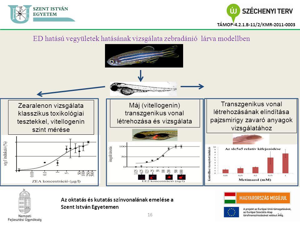 16 TÁMOP-4.2.1.B-11/2/KMR-2011-0003 Az oktatás és kutatás színvonalának emelése a Szent István Egyetemen ED hatású vegyületek hatásának vizsgálata zebradánió lárva modellben Zearalenon vizsgálata klasszikus toxikológiai tesztekkel, vitellogenin szint mérése Máj (vitellogenin) transzgenikus vonal létrehozása és vizsgálata Transzgenikus vonal létrehozásának elindítása pajzsmirigy zavaró anyagok vizsgálatához
