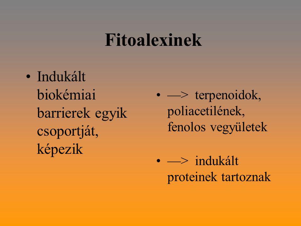 Fitoalexinek Indukált biokémiai barrierek egyik csoportját, képezik —> terpenoidok, poliacetilének, fenolos vegyületek —> indukált proteinek tartoznak