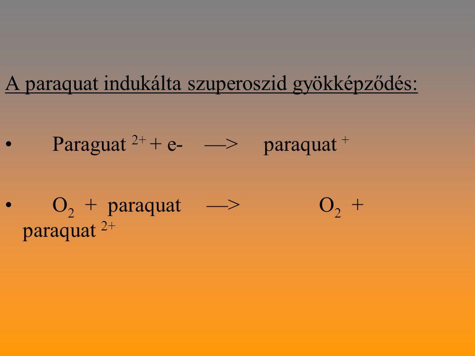 A paraquat indukálta szuperoszid gyökképződés: Paraguat 2+ + e- —> paraquat + O 2 + paraquat —> O 2 + paraquat 2+
