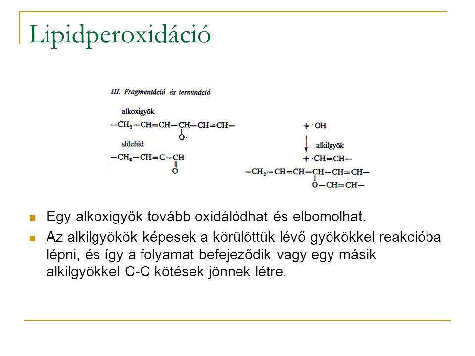 Lipidperoxidáció Egy alkoxigyök tovább oxidálódhat és elbomolhat. Az alkilgyökök képesek a körülöttük lévő gyökökkel reakcióba lépni, és így a folyama