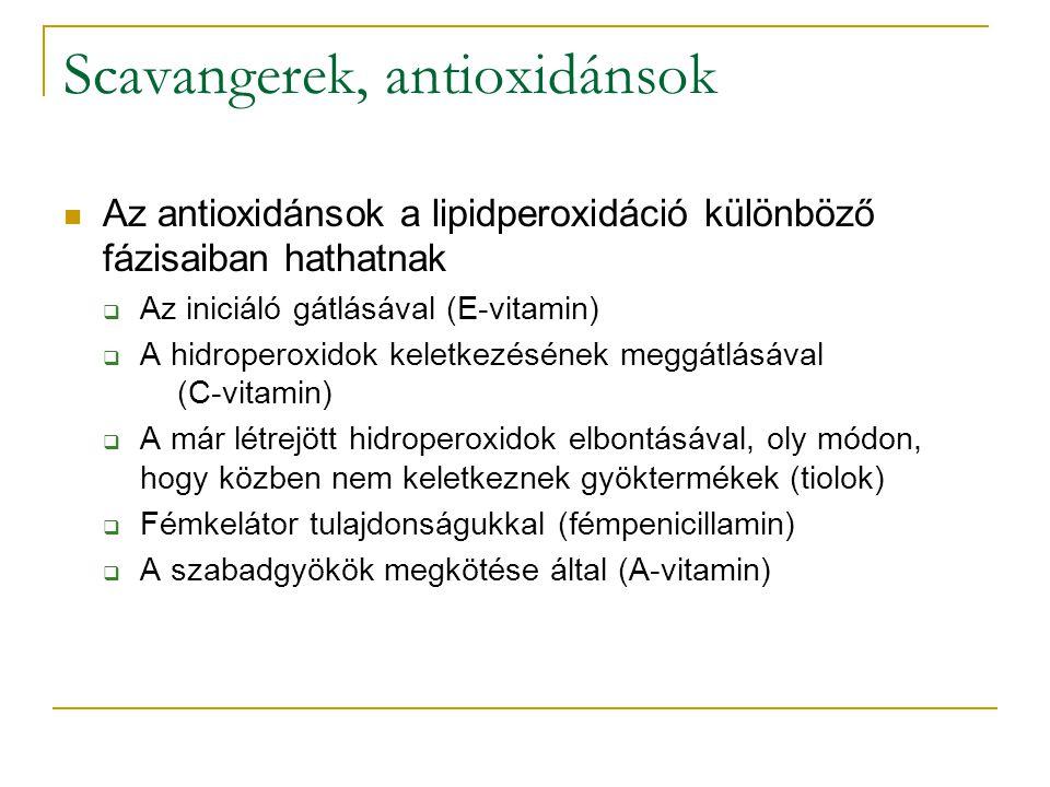 Scavangerek, antioxidánsok Az antioxidánsok a lipidperoxidáció különböző fázisaiban hathatnak  Az iniciáló gátlásával (E-vitamin)  A hidroperoxidok