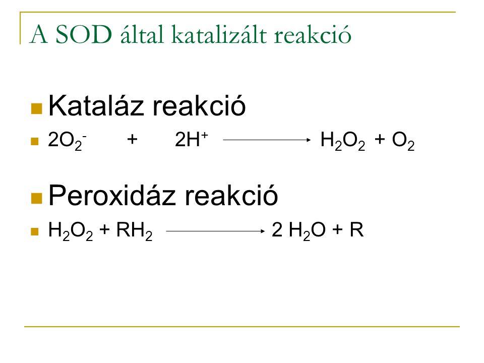 A SOD által katalizált reakció Kataláz reakció 2O 2 - +2H + H 2 O 2 + O 2 Peroxidáz reakció H 2 O 2 + RH 2 2 H 2 O + R