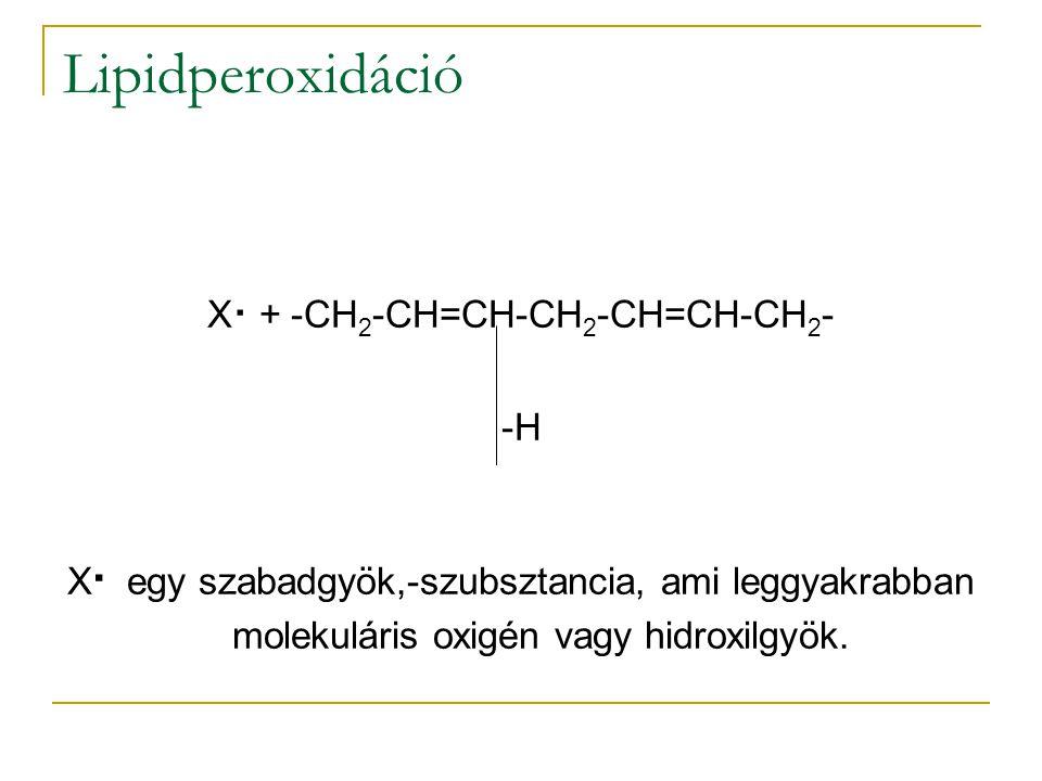 Lipidperoxidáció X. + -CH 2 -CH=CH-CH 2 -CH=CH-CH 2 - -H X. egy szabadgyök,-szubsztancia, ami leggyakrabban molekuláris oxigén vagy hidroxilgyök.