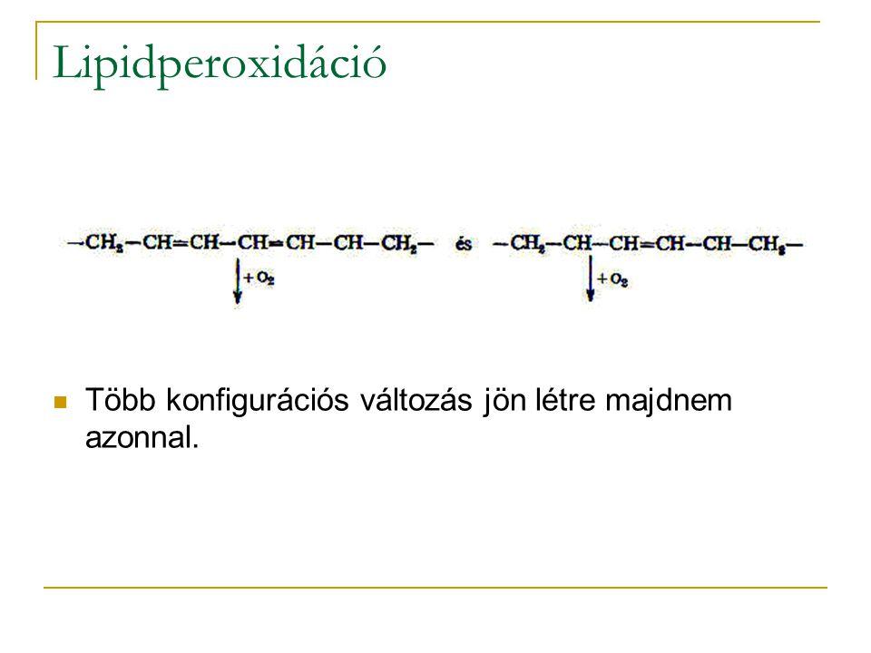 Lipidperoxidáció Több konfigurációs változás jön létre majdnem azonnal.