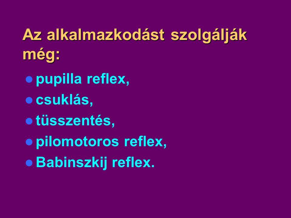 Az alkalmazkodást szolgálják még: pupilla reflex, csuklás, tüsszentés, pilomotoros reflex, Babinszkij reflex.