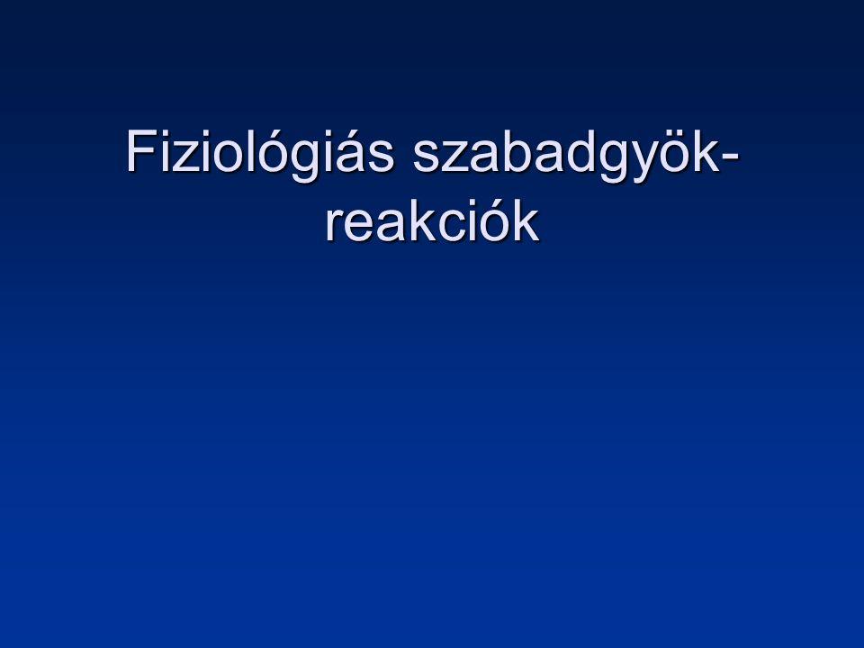 Szerepük a fagocitózisban A sejtek minden részében végbemenő fiziológiás szabadgyök-reakciók számos fiziológiás folyamatban játszanak szerepet.