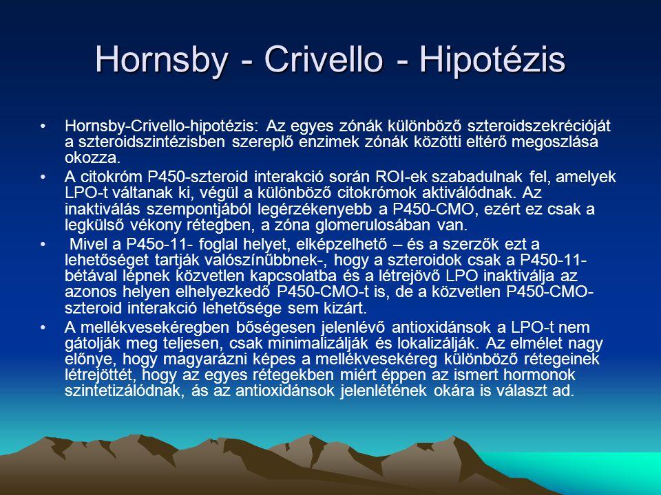 Hornsby - Crivello - Hipotézis Hornsby-Crivello-hipotézis: Az egyes zónák különböző szteroidszekrécióját a szteroidszintézisben szereplő enzimek zónák közötti eltérő megoszlása okozza.
