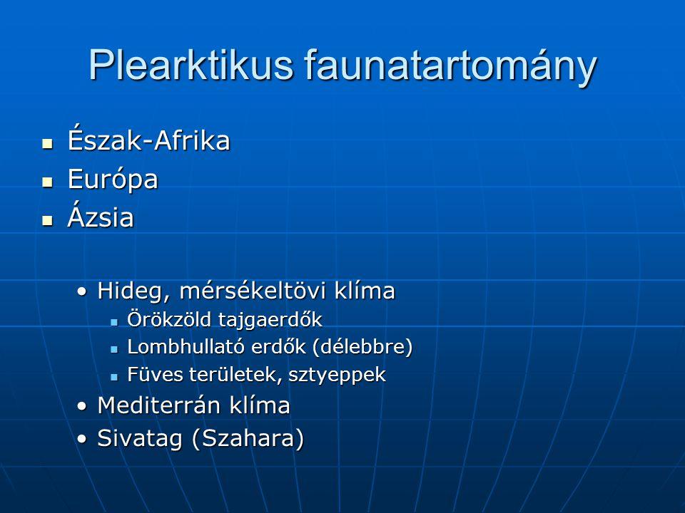 Plearktikus faunatartomány Észak-Afrika Észak-Afrika Európa Európa Ázsia Ázsia Hideg, mérsékeltövi klímaHideg, mérsékeltövi klíma Örökzöld tajgaerdők