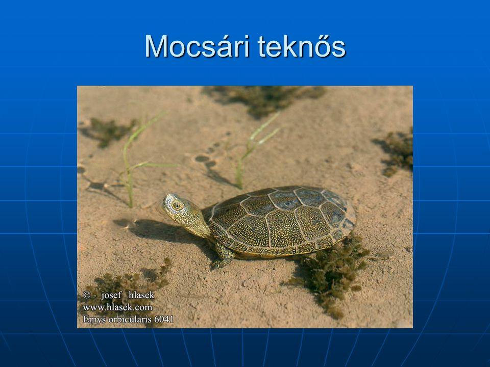 Mocsári teknős