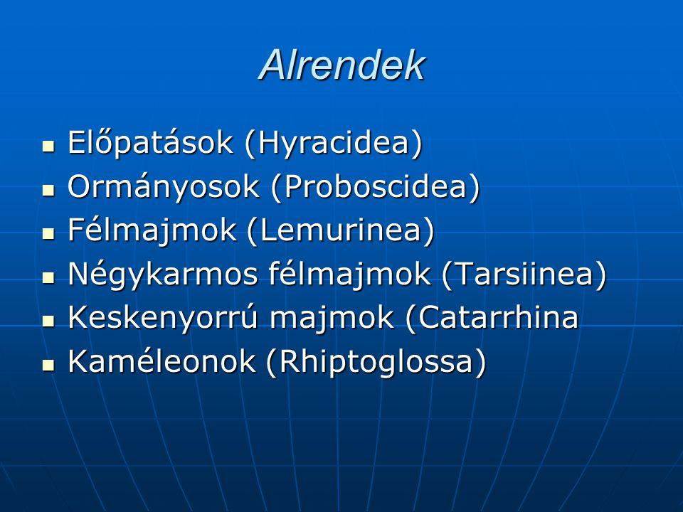 Alrendek Előpatások (Hyracidea) Előpatások (Hyracidea) Ormányosok (Proboscidea) Ormányosok (Proboscidea) Félmajmok (Lemurinea) Félmajmok (Lemurinea) N