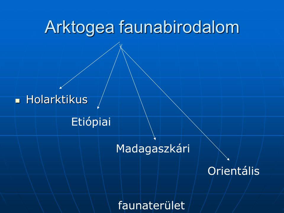 Arktogea faunabirodalom Holarktikus Holarktikus Etiópiai Madagaszkári Orientális faunaterület