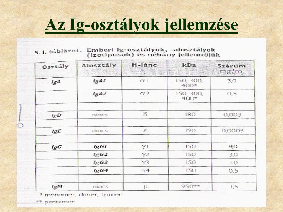 A nehézláncok izotípusa alapján az emberi Ig-k öt osztályba sorolhatók: IgA, IgD, IgE, IgG, IgM.