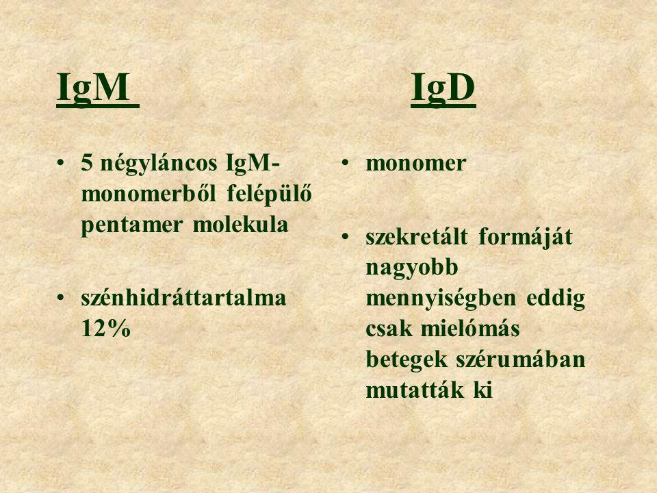 IgG az ellenanyagok mintegy 75% ebbe az osztályba tartozik másodlagos immunválasz során képződő ellenanyagok zöme kis szénhidráttartalmú (3%) négy alosztály: IgG1, IgG2, IgG3, IgG4