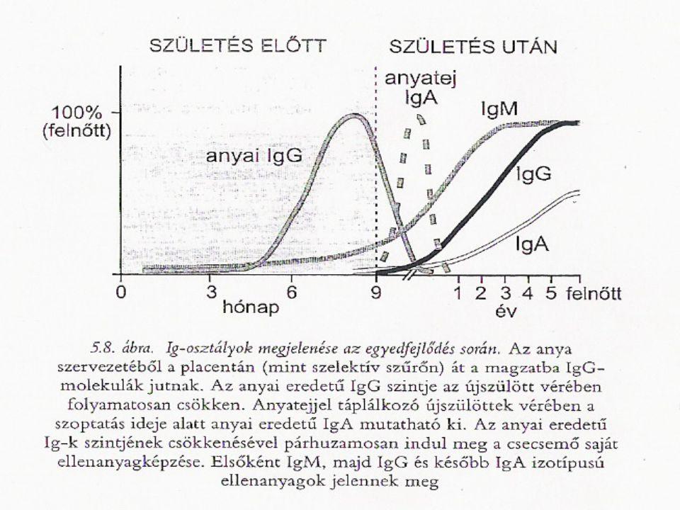 IgE vérben kis koncentrációban található java részt sejtek felületéhez kötődik monomer szénhidráttartalma 12% paraziták elleni védekezés allergiás fol