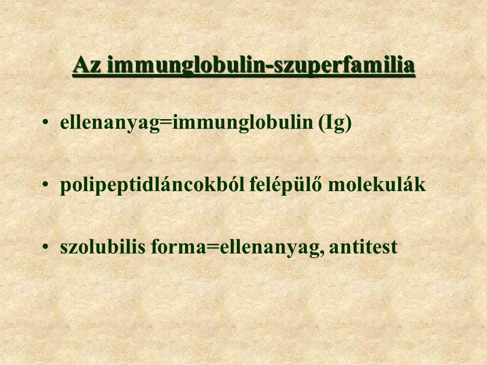 Az immunglobulin-szuperfamilia ellenanyag=immunglobulin (Ig) polipeptidláncokból felépülő molekulák szolubilis forma=ellenanyag, antitest