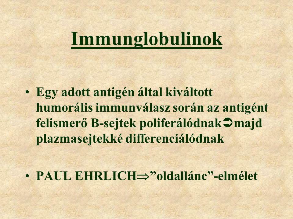 Immunglobulinok Egy adott antigén által kiváltott humorális immunválasz során az antigént felismerő B-sejtek poliferálódnak  majd plazmasejtekké differenciálódnak PAUL EHRLICH  oldallánc -elmélet