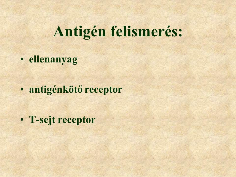 Antigén felismerés: ellenanyag antigénkötő receptor T-sejt receptor