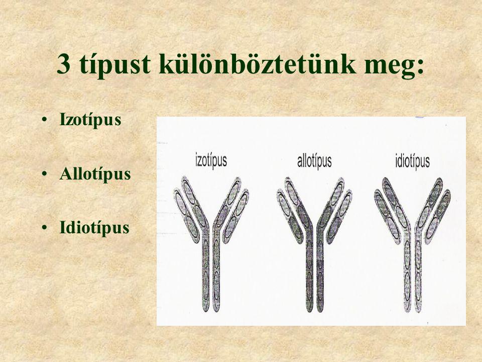Immunglobulinok (Ig) jellemzése Hol fordul elő? Mivel jellemezhetők? Megfelelő ellenanyagokat tartalmazó vérsavókkal szerológiailag jellemezhető.