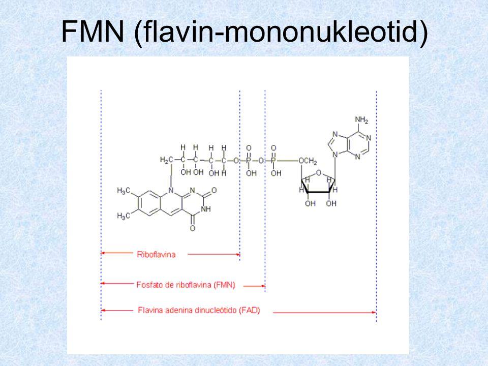 Dinukleotidok 1.