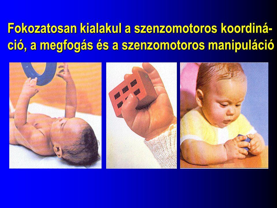 Fokozatosan kialakul a szenzomotoros koordiná- ció, a megfogás és a szenzomotoros manipuláció