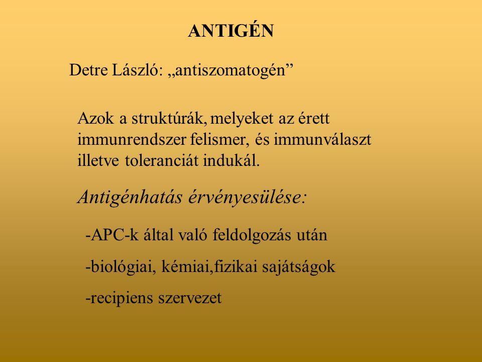 """ANTIGÉN Detre László: """"antiszomatogén"""" Azok a struktúrák, melyeket az érett immunrendszer felismer, és immunválaszt illetve toleranciát indukál. Antig"""