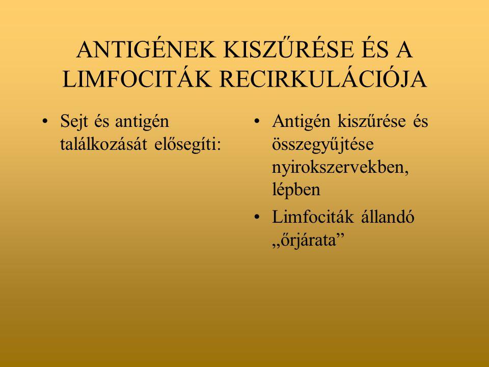 """ANTIGÉNEK KISZŰRÉSE ÉS A LIMFOCITÁK RECIRKULÁCIÓJA Sejt és antigén találkozását elősegíti: Antigén kiszűrése és összegyűjtése nyirokszervekben, lépben Limfociták állandó """"őrjárata"""