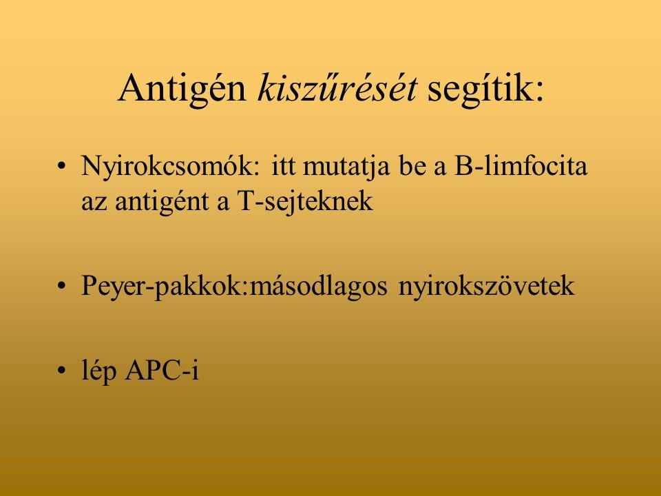 Antigén kiszűrését segítik: Nyirokcsomók: itt mutatja be a B-limfocita az antigént a T-sejteknek Peyer-pakkok:másodlagos nyirokszövetek lép APC-i