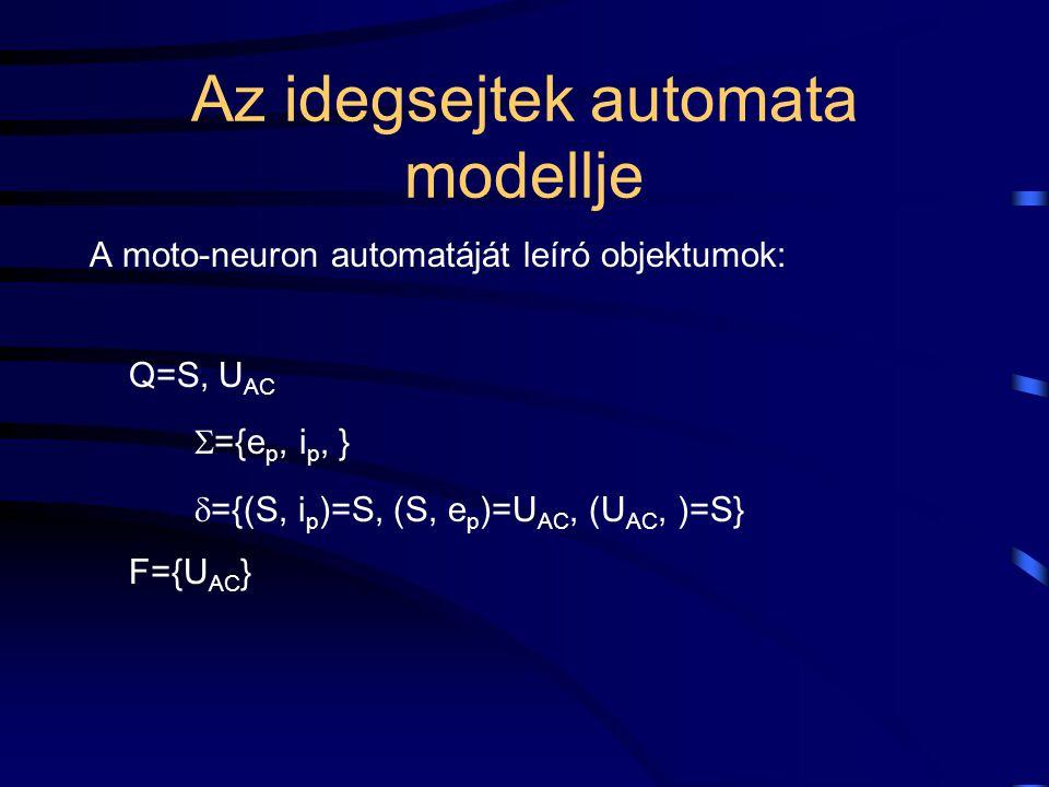 Az idegsejtek automata modellje A moto-neuron automatáját leíró objektumok: Q=S, U AC  ={e p, i p, }  ={(S, i p )=S, (S, e p )=U AC, (U AC, )=S} F={U AC }