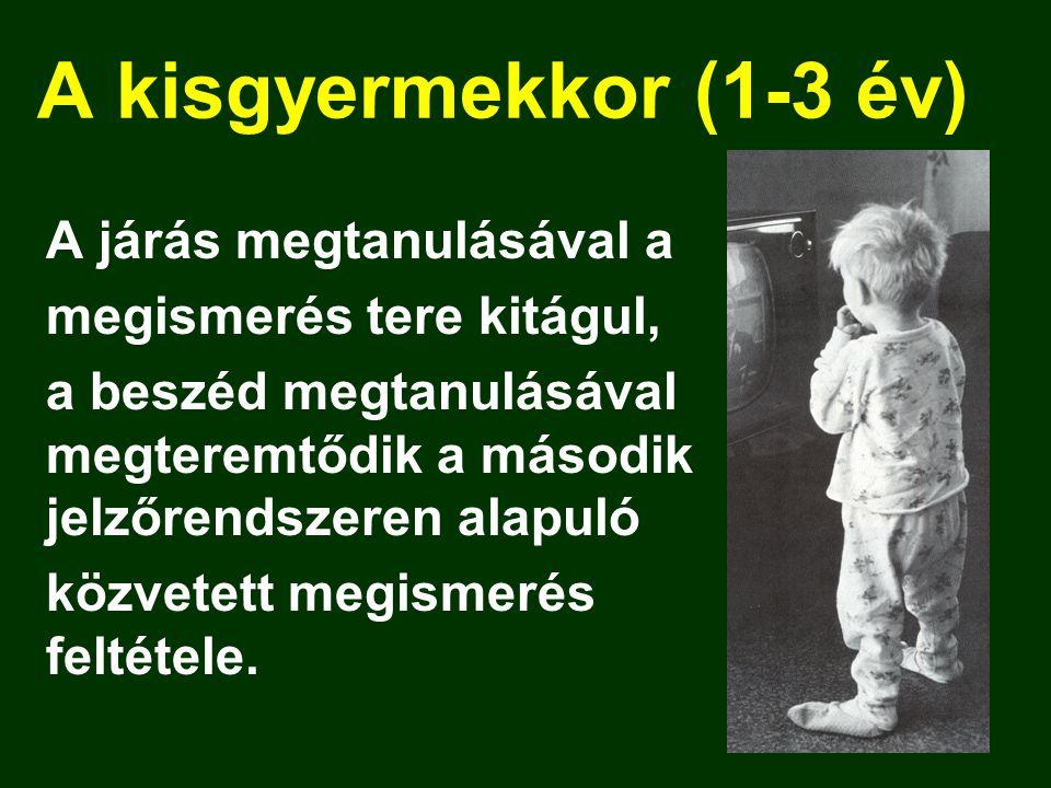 A kisgyermekkor (1-3 év) A járás megtanulásával a megismerés tere kitágul, a beszéd megtanulásával megteremtődik a második jelzőrendszeren alapuló közvetett megismerés feltétele.