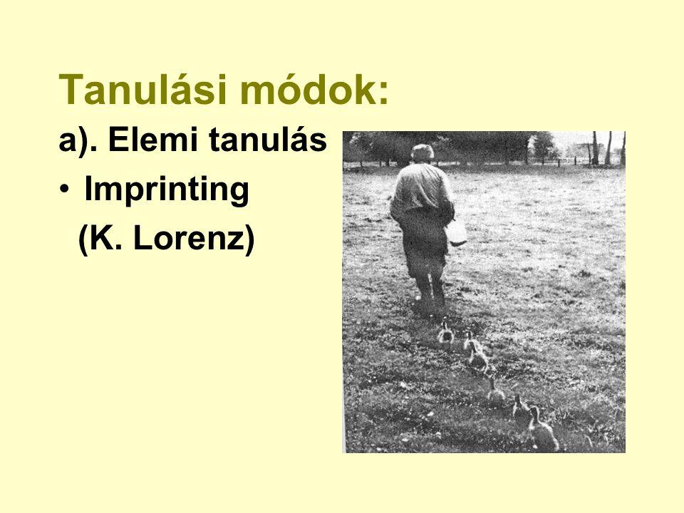 Tanulási módok: a). Elemi tanulás Imprinting (K. Lorenz)